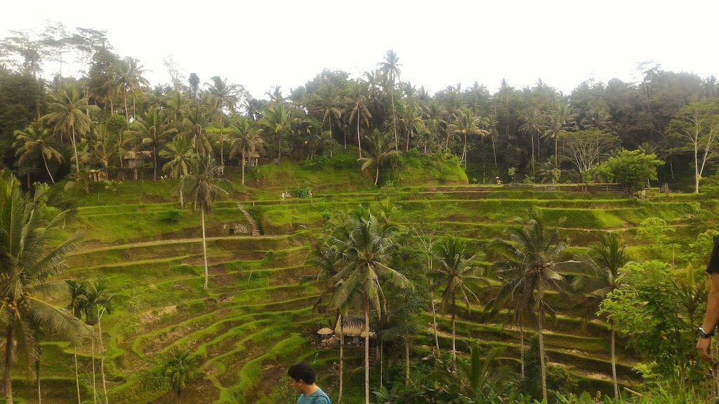 First Time To Go To Bali? Important To Read This